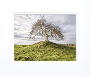 Ballinrobe lonely tree.jpg